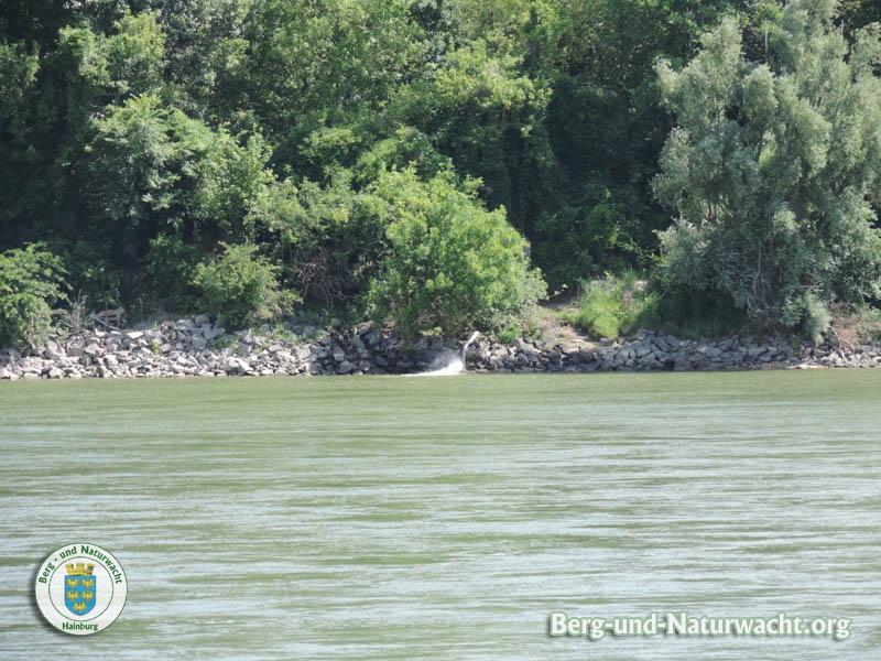 Gewässerschutz auf der Donau - fragwürdige Einleitung in der Slowakei | Foto: Berg- und Naturwacht.org