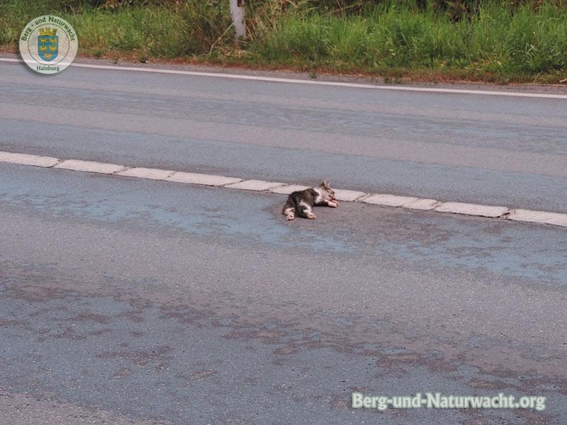 Opfer des Straßenverkehrs | Foto: Berg-und-Naturwacht.org