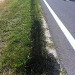 Eine nicht unerhebliche Menge von Motoröl nah der landwirtschaftlich genutzten Fläche | Foto: Berg-und-Naturwacht.org