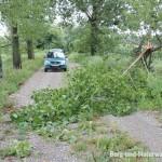 Unwetterschaden an Bäumen | Foto: Berg-und-Naturwacht.org