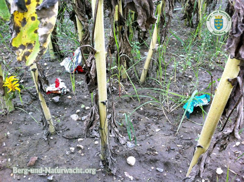 Abfall in einem Feld mit Sonnenblumen | Foto: Berg-und-Naturwacht.org