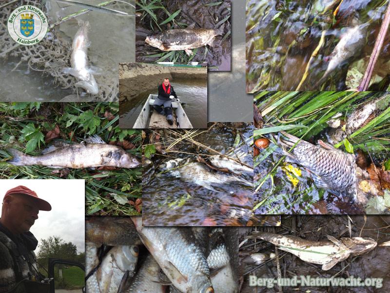 Einsatz der NÖ Berg- und Naturwacht Hainburg zur Räumung von Fischkadavern nach Überschwemmung in Wolfsthal | Foto: Berg-und-Naturwacht.org