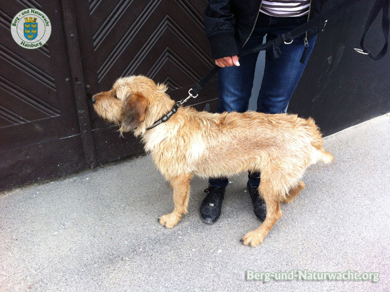 Realbeispiel: ein entlaufener Hund, konnte von Glöckel und Mithelferin eingefangen werden | Foto: Berg-und-Naturwacht.org